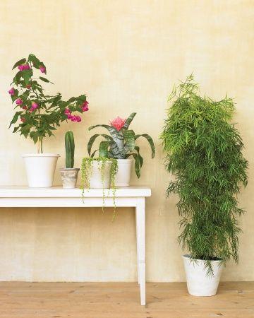 false aralia / friendship plant / grape ivy / philodendran / jade plant / chinese evergreen