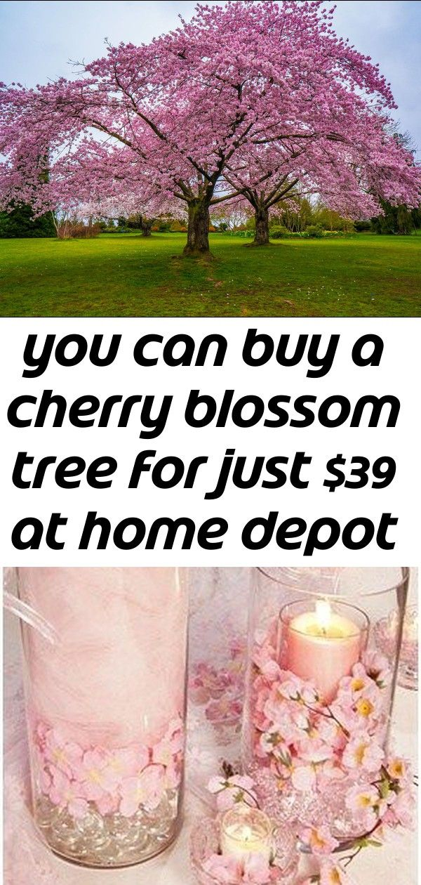 15 In H Pink Cherry Blossom Bonsai Silk Tree Cherry Blossom Bonsai Tree Indoor Bonsai Tree Bonsai Plants