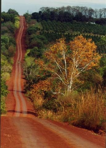 paisajes de misiones - caminos de tierra colorada, interior de Misiones