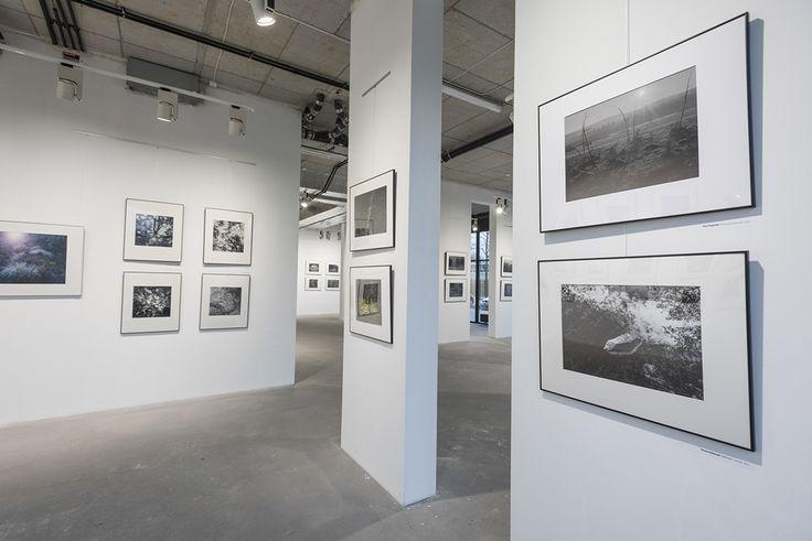 Wystawa fotografii PSF EKWIWALENTY