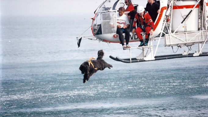 The Italian Coast Guard Is Using Newfoundlands To Rescue People – See Them In Action HERE