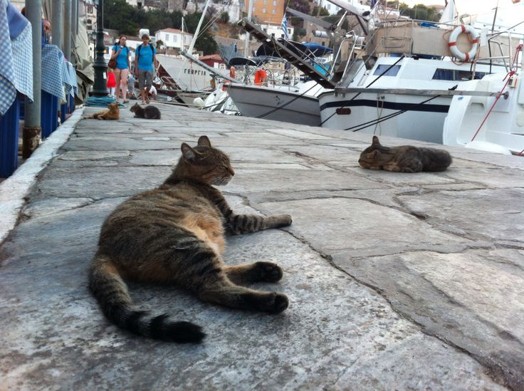 Hydra is famous for its cats!