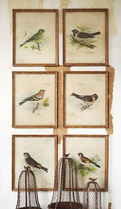 Vintage Bird Prints: Set of 6