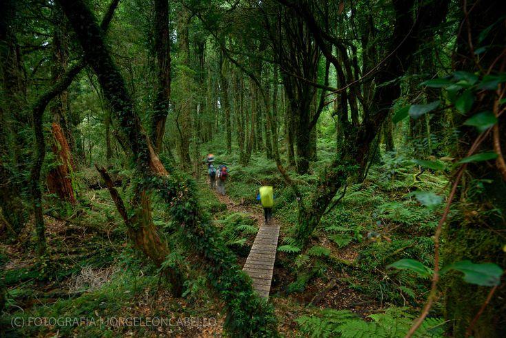 Bosques Siempre verdes - Parque nacional Tagua Tagua (Patagonia - CHILE)
