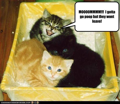 Cat Law Poo Meme
