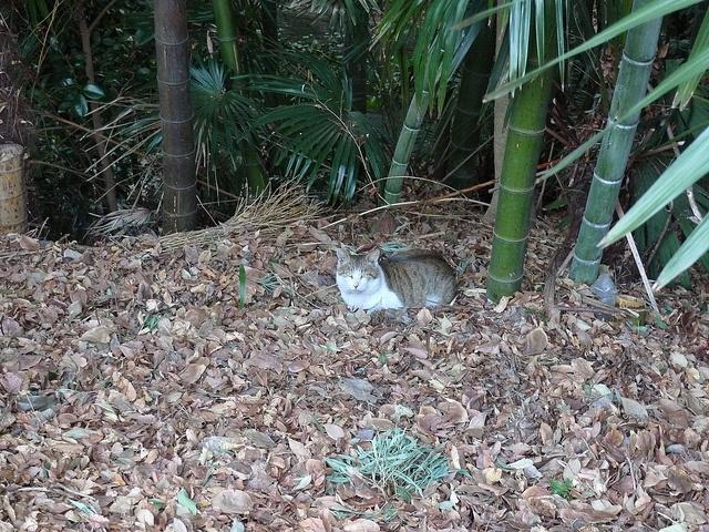 Cat in the Banboo Bush behind Seijou Ishii, Todoroki