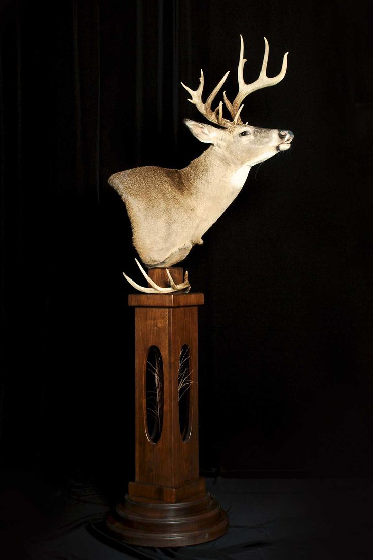 Deer Pedestal Mount In 2019 Taxidermy Display Deer
