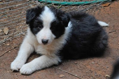 The Modern Bark - Dog Training Tips and Insights: Ten Puppy Teething Survival Tips!