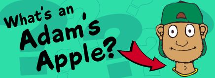 """""""What's an Adam's Apple?"""" from KidsHealth.org"""