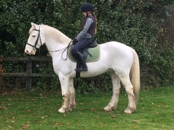 14.3hh Handsome Irish 7yo Appaloosa gelding Cobs for sale in Hampshire, South East!