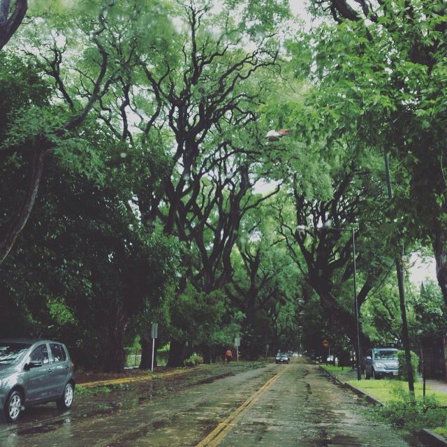 Argentina * lluvia * calor * verano * San Isidro * Buenos Aires