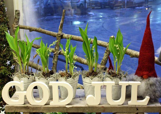 http://holmsundsblommor.blogspot.se/2011/12/god-jul.html Skyltfönster med liljokonvaljer