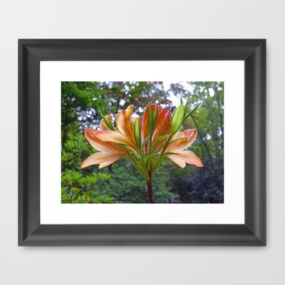 Rhododendron in Orange Framed Art Print by Robert Gipson - $51.00