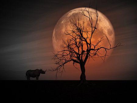 Solitude Moon!