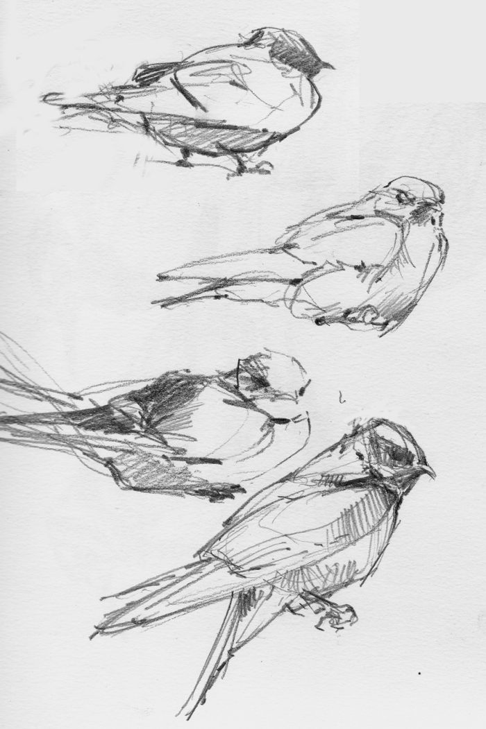 Line Drawing Of Animals And Birds : Best ideas about bird drawings on pinterest tree