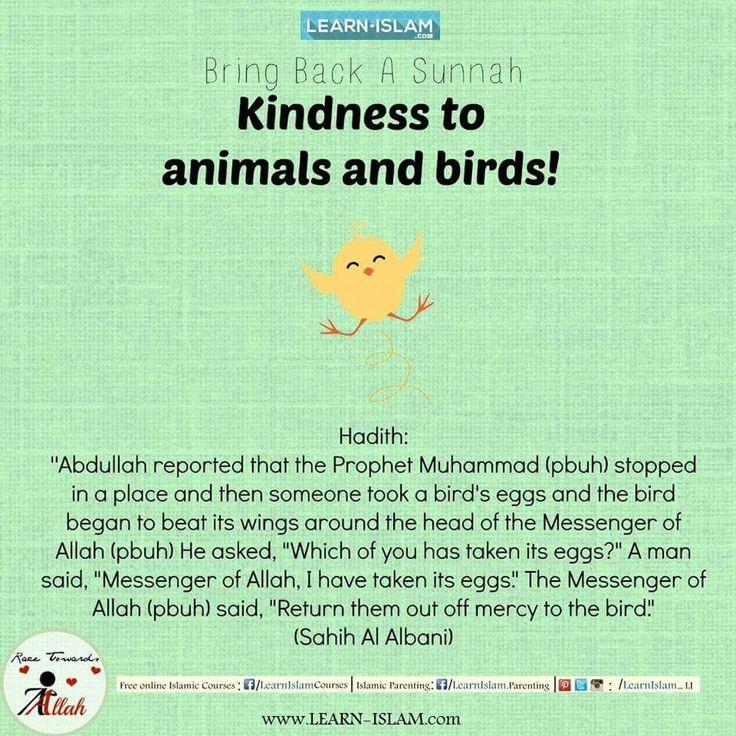 #Islam #Quran #Sunnah #Hadeeth #Hadith #Muslim #Aqeedah #Ummah #Muslimah #Hijad #Beard #Niqab #Niqabi #Niqabis #Deen #Dawah #Tawheed #LearnIslam #ForgottenSunnah #ReviveaSunnah #Salah #Caring #Compassionate #Animals #WhoisMuhammad