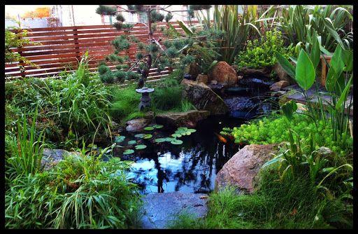 M s de 25 ideas incre bles sobre estanques koi en for Plantas para estanque peces koi