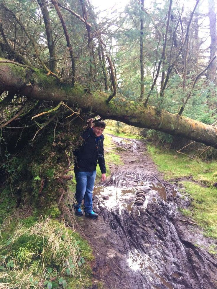 Exploring Ticknock Forest • Where The Heart Is
