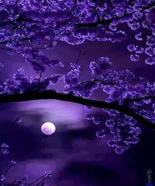 Stunning Moon Through Purple