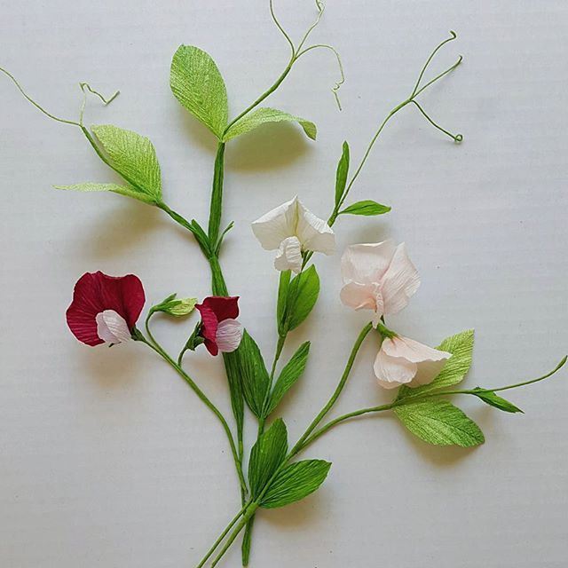 """Sweet Peas! (The next tutorial to be posted this weekend over @a.casual.florilegium) Meaning in Floriography, """"Gratitude, Blissful Pleasure."""" Thank you for the floriography magazine @gracedchin !  How cool would it be to include that in a gift of crafted flowers?"""