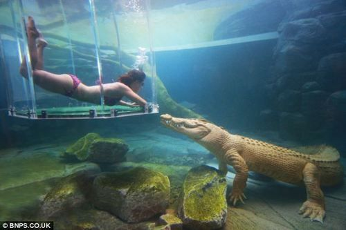 Crocosaurus Cove park — aptly located in Darwin, Australia  Swim with Gators.. NICE!