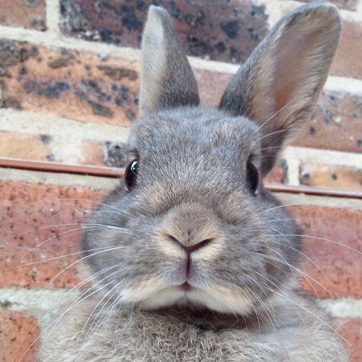 "** "" If yoo chase two rabbitz, bof willz escape."""