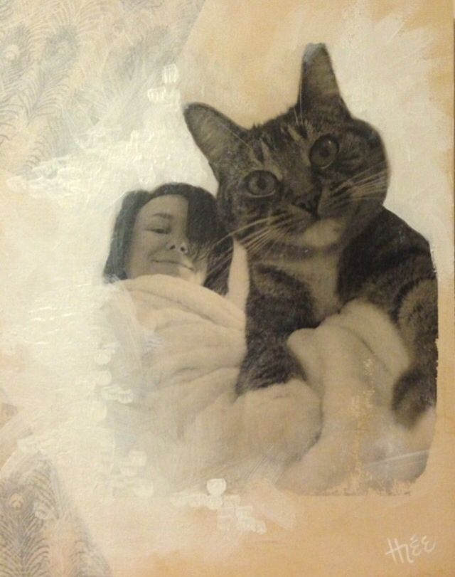 Par Marythée Daigle: Transfert photo sur bois et acrylique 11'X14'/ photo transfert on wood and acrylic  #paint #painting #peinture #photo #acrylic #acrylique #bois #wood #art #illustration #cat #chat