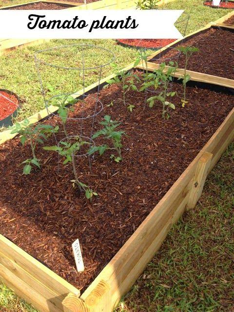 Backyard Gardening #DIY #fruit #vegetable #garden
