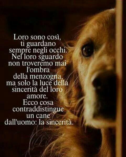 Mi prenderò un cane...ho un immenso bisogno di sincerità...