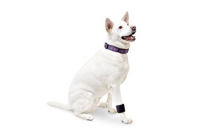 Walkin' Wrist Wrap  The Walkin' Wrist Wrap, fitted securely, stabilizes your dog's forearm bones and lends support to the muscles and tendons of the wrist and leg.  Your dog's front legs are much like your own arms. Directly above each paw is the wrist joint. The dog wrist wrap, fitted securely, stabilizes your dog's forearm bones and lends support to the muscles and tendons of the wrist and leg.