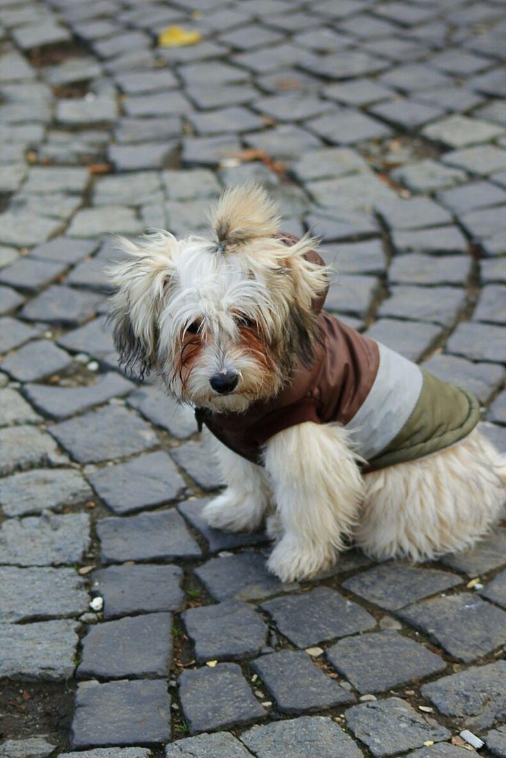 #dogstyle, #cityphotography,#dog,#animal, #action