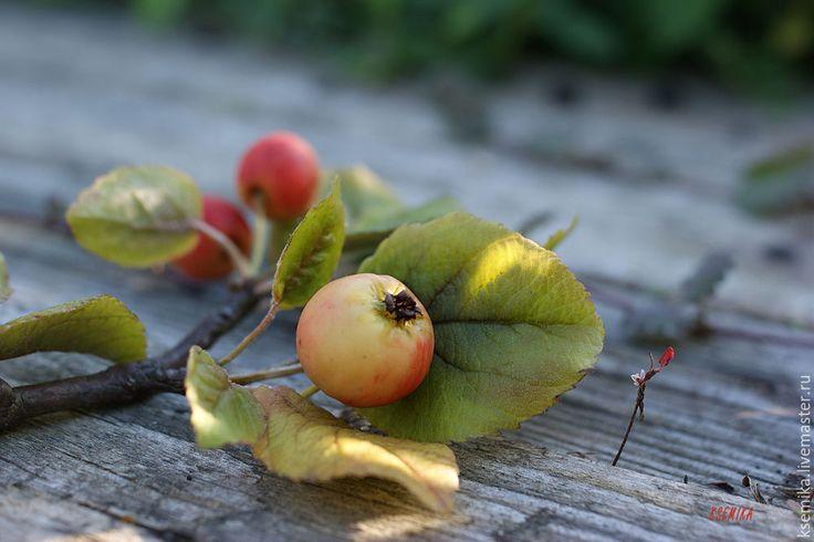 Сегодня я постараюсь наиболее точно описать процесс создания из полимерной глины веточки яблони, известной как «райская». Плоды этой яблони крайне невелики, но именно в этом, как мне кажется, и кроется её очарование. Полимерная глина — идеальный материал для создания максимально реалистичных флористических композиций, которые впоследствии смогут послужить прекрасным подарком или же украсить ваш интерьер. Итак, приступим.