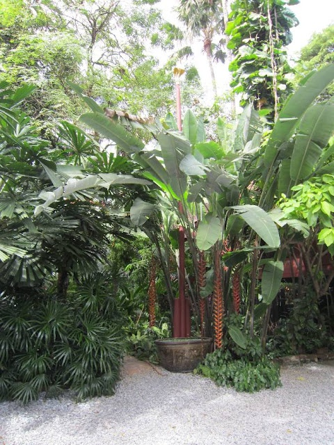 Garden Ideas Tropical 33 best tropical gardening ideas images on pinterest | landscaping
