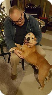 Labrador Retriever Mix Dog for adoption in New York, New York - JT