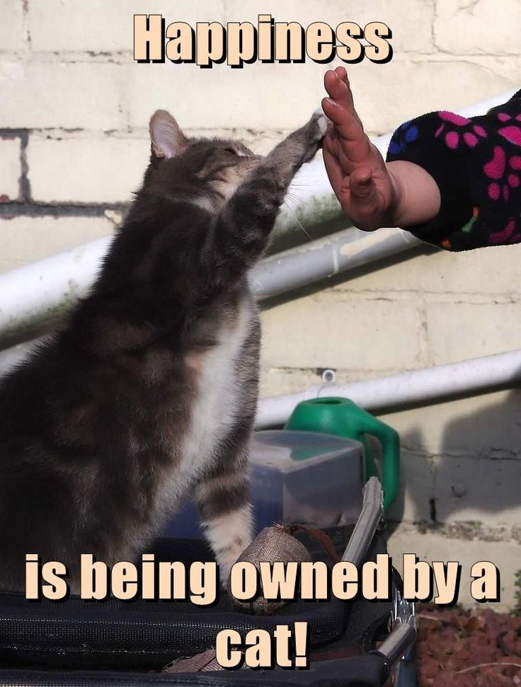 Happiness  is being owned by a cat!