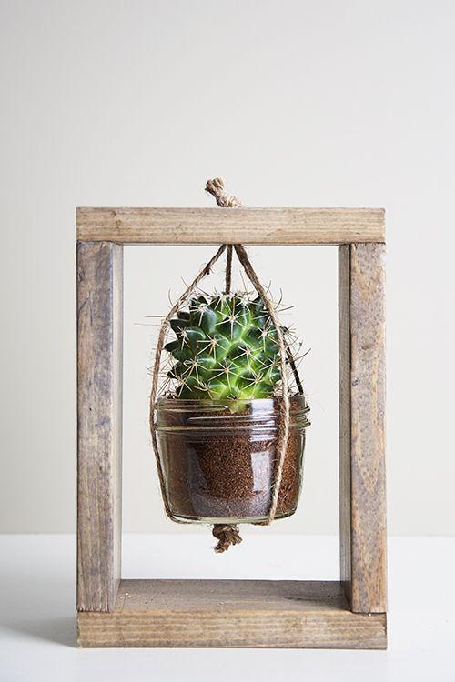 cactusplanter05