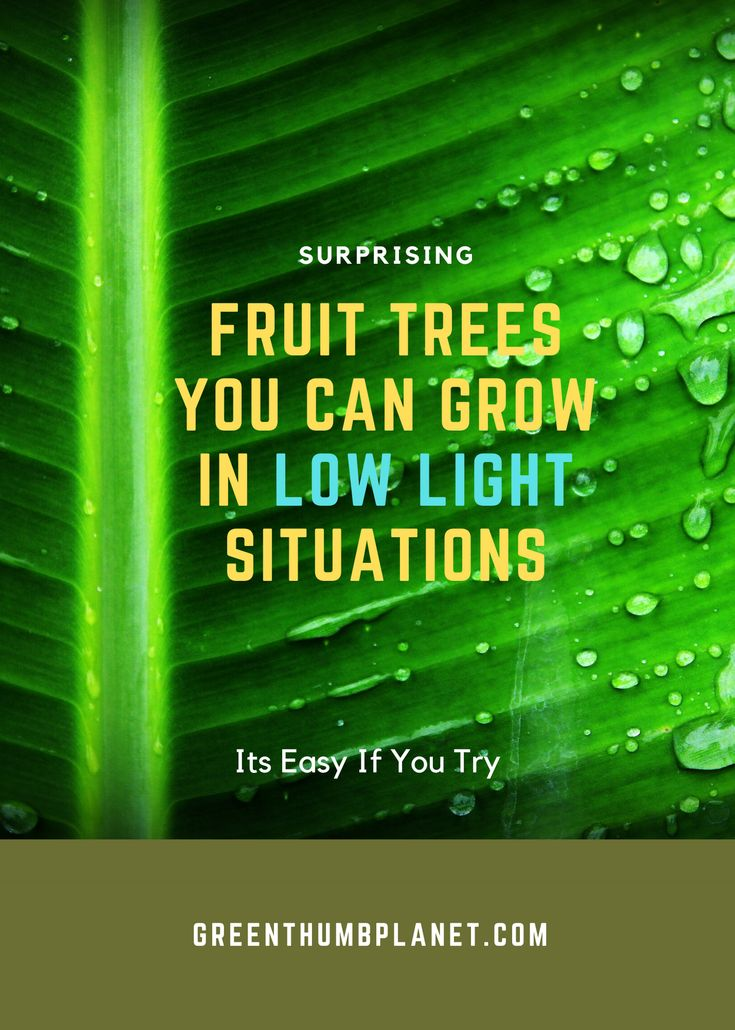 You Can Grow These Fruit Trees Indoors In Low Light 400 x 300