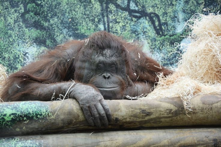 Notre récit sur le zoo de Beauval