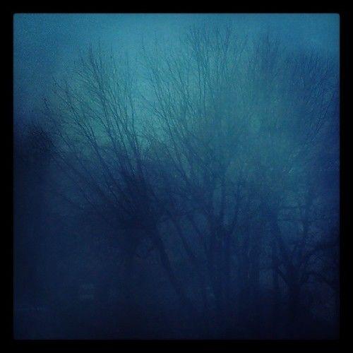 Bedroom window view #mist #darkness #creepy #tree