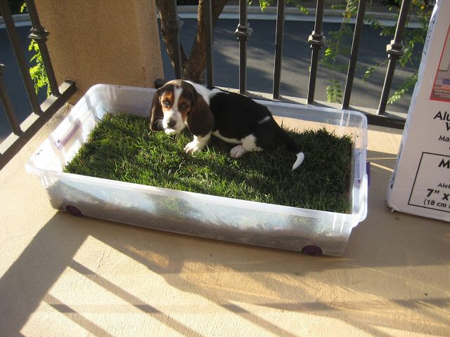 Planting Grass For Your Pets When You Live In An Apartment! Would use a kiddie pool, or something larger than what is pictured.