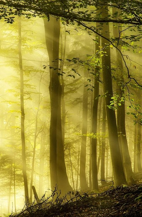 Autumn Forest`: