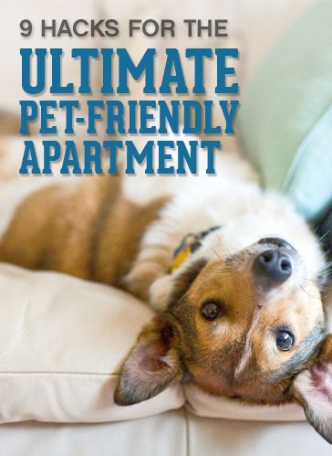 You may have found the perfect pet-friendly apartment, but that doesn't guarantee your pets will be apartment-friendly. That's why we're offering nine hacks for keeping your apartment cleaner and more relaxed while living with a pet.