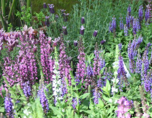 La caratteristica di questo bel giardino realizzato qualche anno fa a Soriano nel Cimino sono i colori ,una sinfonia di viola a contrasto con i gialli e rosa tenue ,le graminacee che nel misto ammorbidiscono i toni di questi colori…