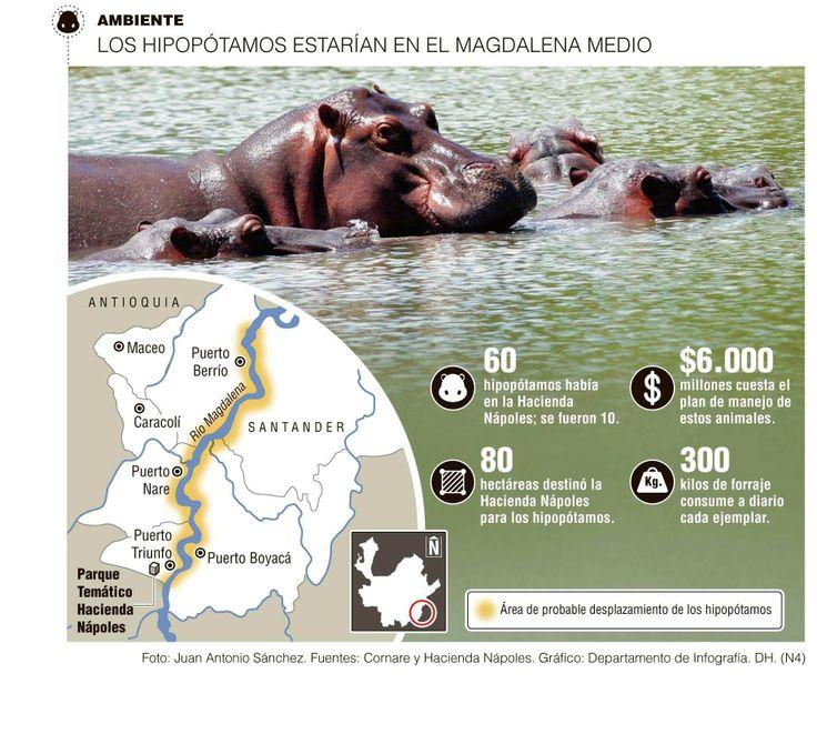 Diez hipopótamos se salieron de Nápoles Cornare lanzó alerta por el peligro que representan estos animales para las personas. No hay ataques reportados.