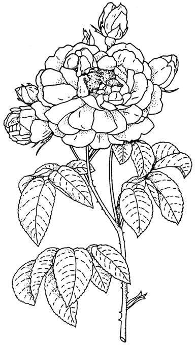 From: Favorite Flowers CD-ROM and Book