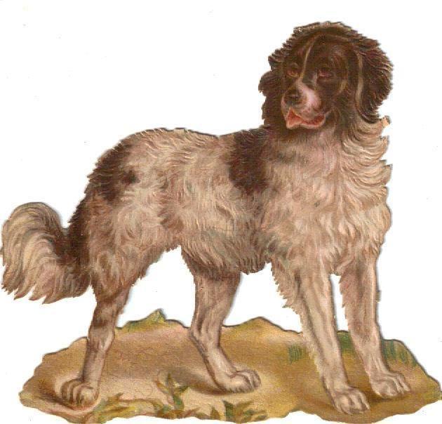 Larger Victorian Die Cut Scrap Spaniel Dog  c1880s: