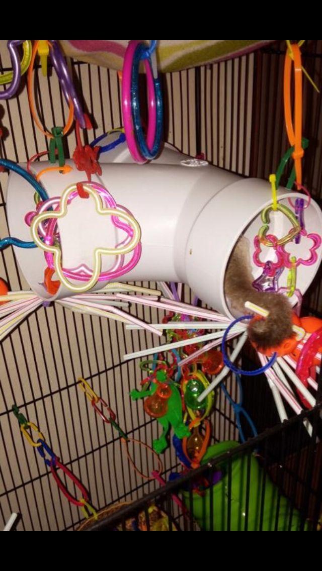 PVC tunnel for sugar glider