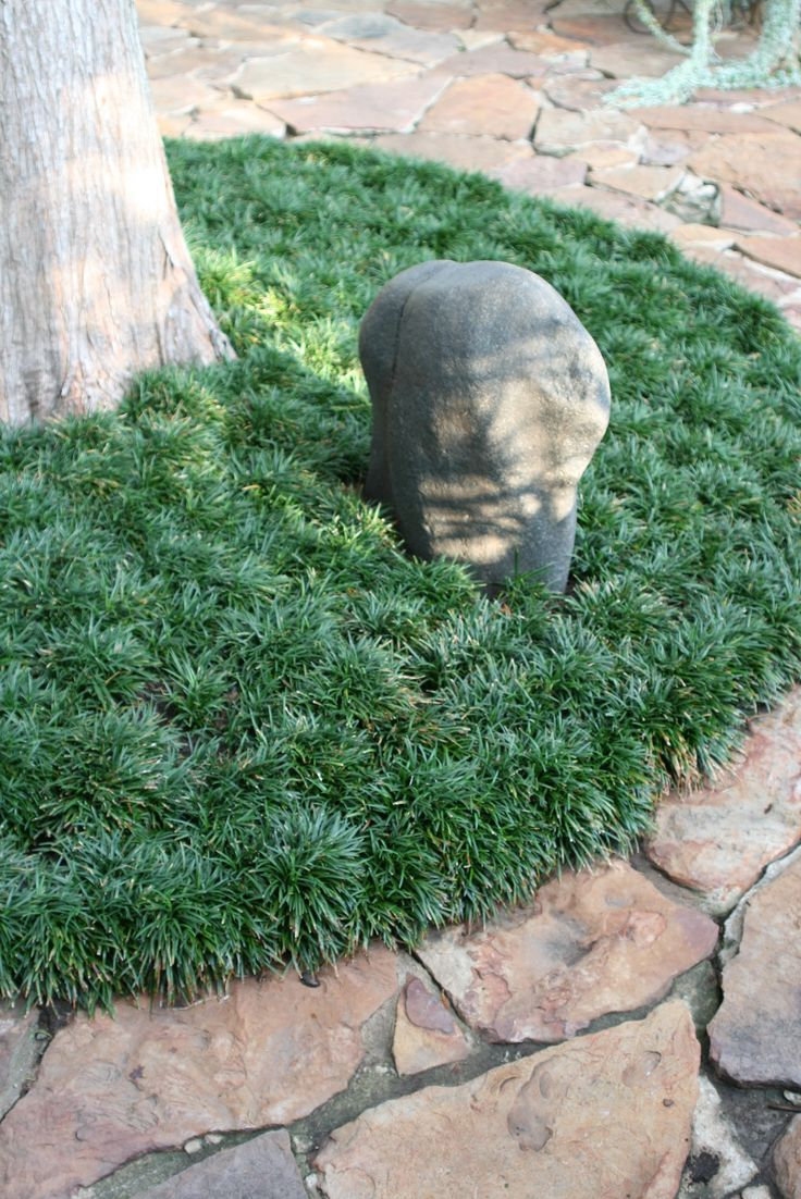 72 best drought tolerant groundcovers images on pinterest