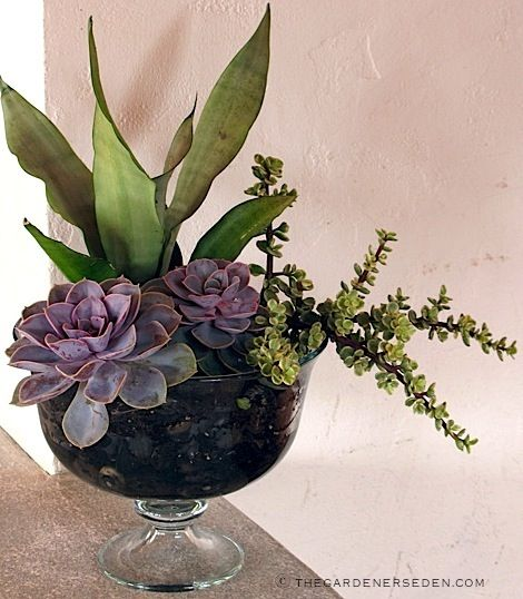 "Succulent ""Terrarium"" - Tabletop Centerpiece or Dry Garden for Indoors or Out. The Gardener's Eden - Bringing Nature's Beauty Indoors: Terrariums Part Two Photography: michaela medina - thegardenerseden.com"