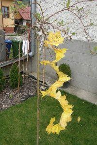 Lietajúci had z listov